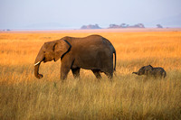 Elephant and Baby, Serengeti National Park
